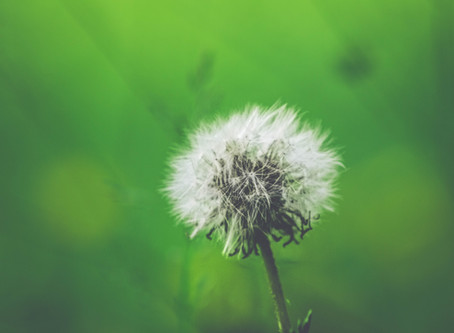 Do You Suffer from These Common Allergies?
