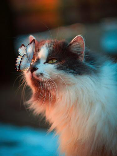 Image by Karina Vorozheeva
