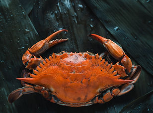 Shop for Fresh or Frozen Crabs at Triton Seafood Market