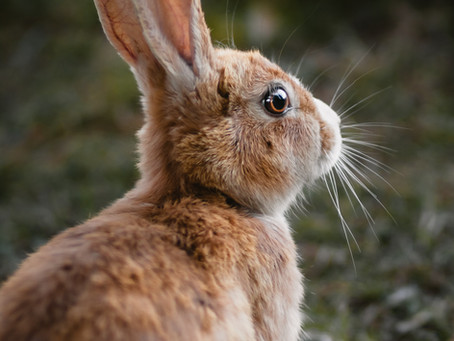March 2021 | The Month of the Rabbit 2021 Outlook