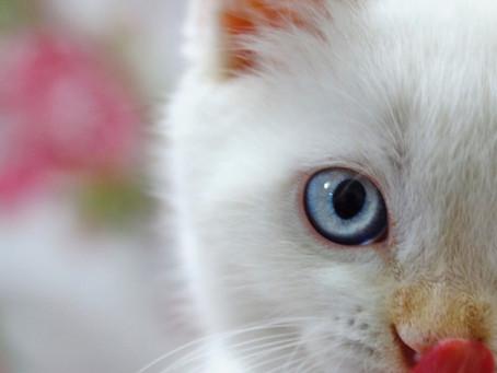 Penuhi Kebutuhan Nutrisi Untuk Kucing Berikut Ini Agar Hewan Kesayangan Tetap Sehat!