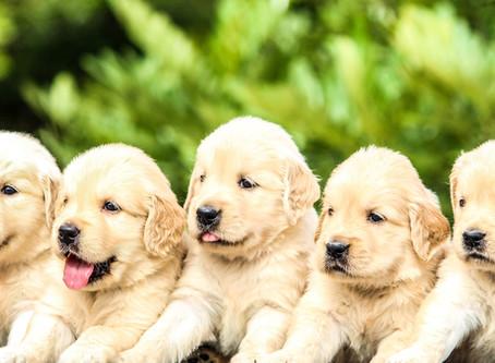 Jeste li spremni za štene?