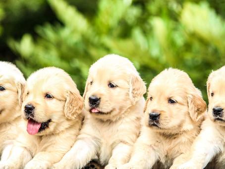 Sve što trebate znati o prehrani štenaca