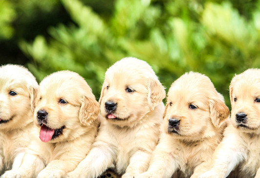 Should I Get 2 Puppies From The Same Litter?