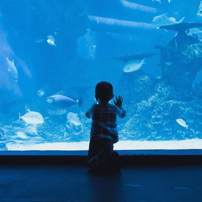 橫濱八景島水族館(coming soon):