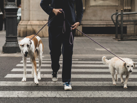 How should I choose a pet sitter or dog walker?