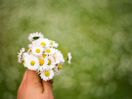 Dandelions, daisies & buttercups