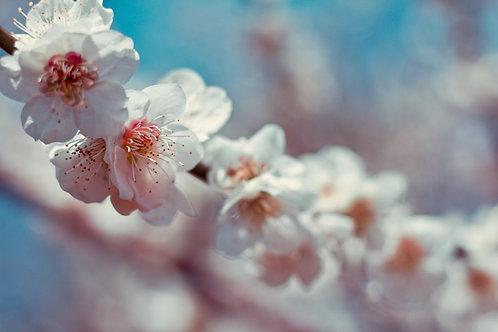Fleur de Fleur Lip Scrub