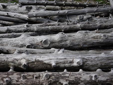 Wie ein Stück Treibholz zu einem Kunstwerk wird