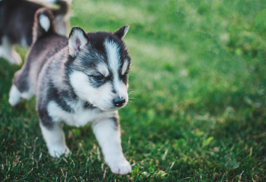 Puppies - Bonding and Health