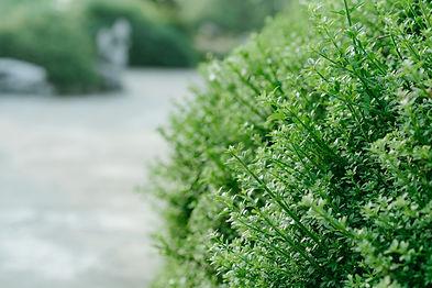 Paysagiste Services à la personne Vendée Les herbiers Saint Fulgent Les Epesses Sèvremont Taille des haies