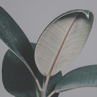 The Best Air-Purifying Houseplants