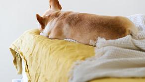 Should I Let My Dog Sleep On My Bed?