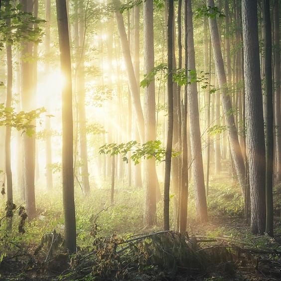 Waldklänge mit Streichduo