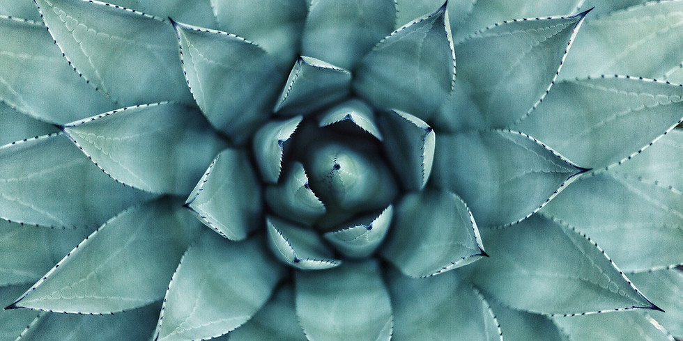 WALK | Passeggiata Botanica, alla scoperta delle piante viaggiatrici di Villa Borghese,