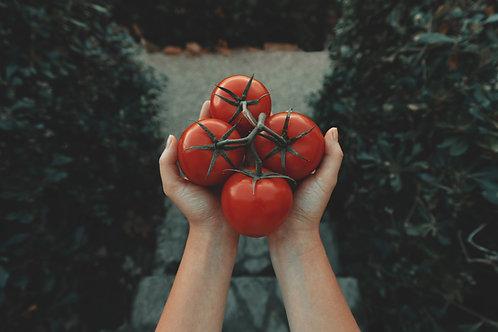 "Tomato Celebrity - 3.5"" Pot"