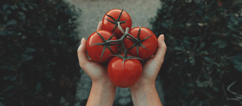 Nei campi di pomodori come la nonna