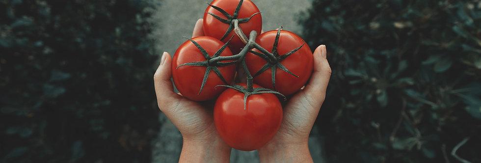 Bonnys Best Tomato Plant
