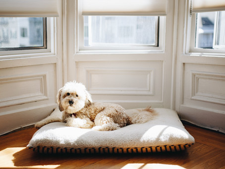Pet Owners and Rental Properties