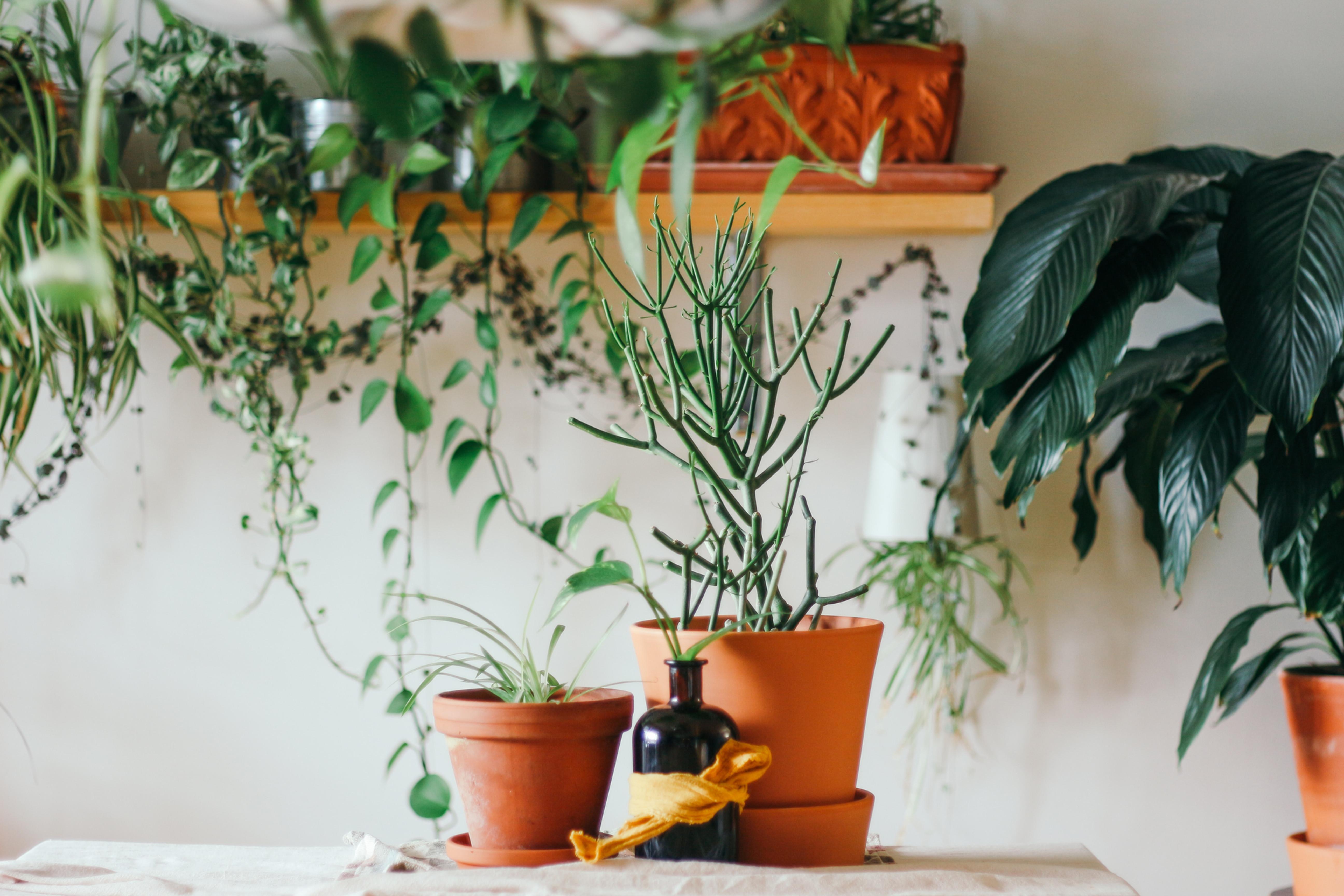 Plant Installation