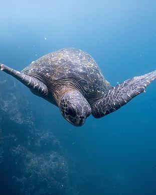Blaycation Travel - Eco Trip - Ecuardor and Galapagos Islands