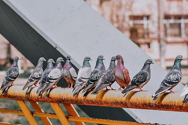 התקנת רשתות נגד יונים בגובה בצפון - עידן עבודות גובה