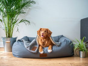 Renting With Your Pet