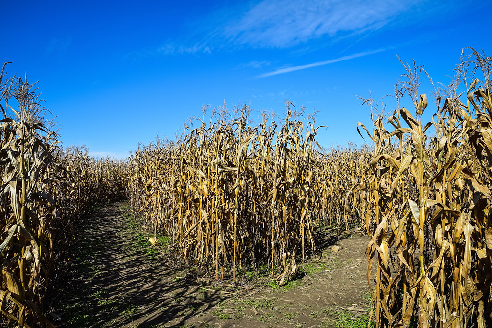 Fall activities near your Leesburg rental