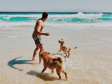 IS SWIMMING GOOD FOR YOUR DOG?