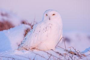 Image by Zdeněk Macháček A wise owl