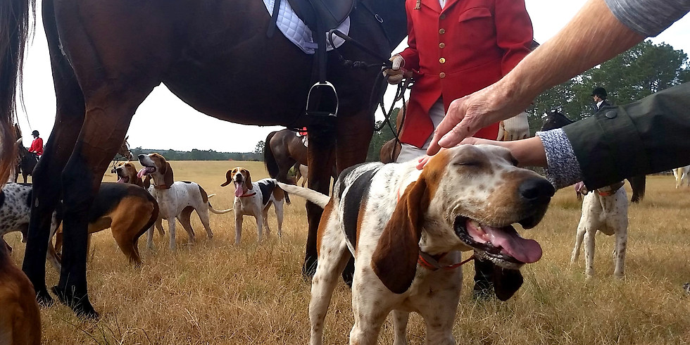 Meet the Oakley hounds and kennel tour