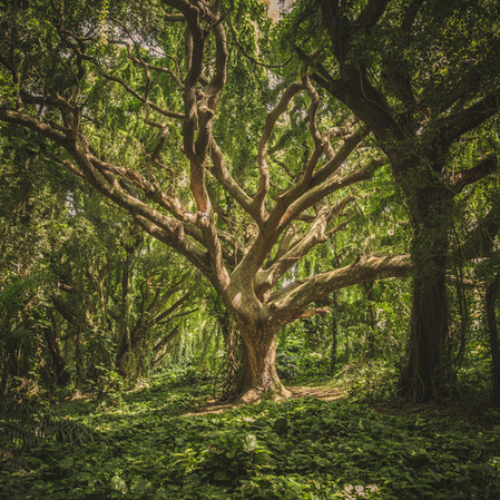 What Trees Can Teach Us About Social Connection