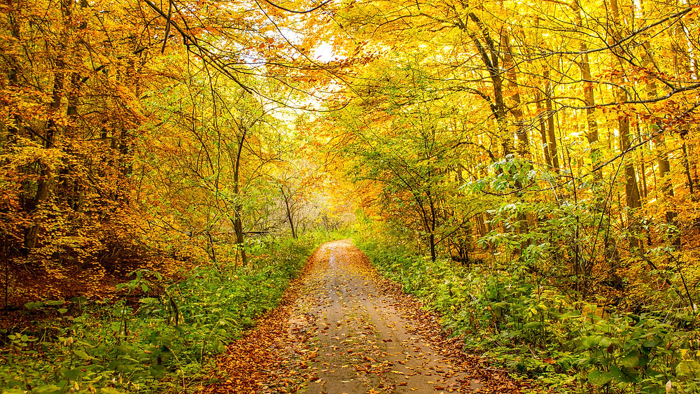 leaf-littered path through the woods drenched in golden sunlight