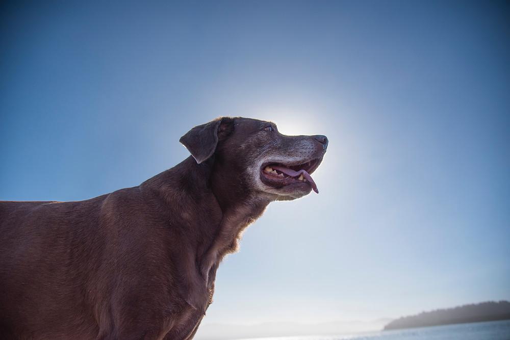 dog arthritis Cuyamaca Animal Hospital Santee San Diego