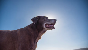 How to Prevent or Treat Pet Arthritis… Without the Medication