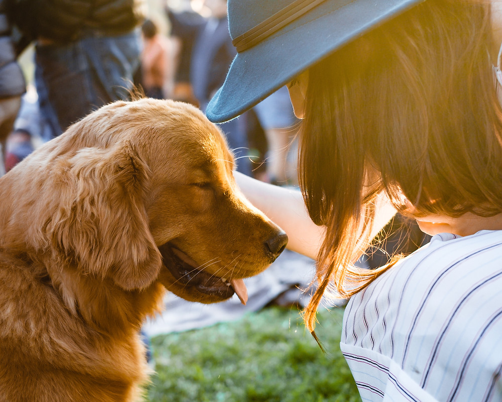 Practicing Mindfulness and Teaching Your Dog to Pay Attention by Dorice Stancher, MBA, CPDT-KA, Bergen County Moms