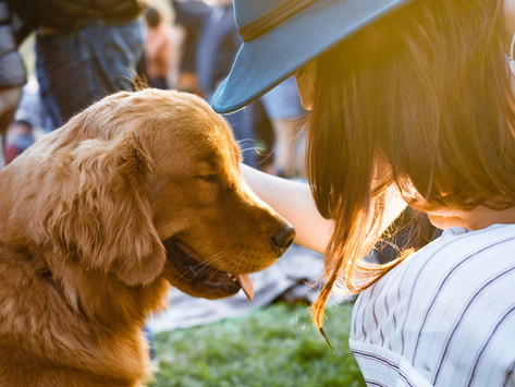 Practicing Mindfulness and Teaching Your Dog to Pay Attention by Dorice Stancher, MBA, CPDT-KA