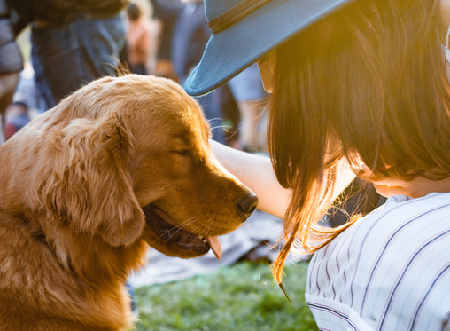 7 Scientific Reasons to Pet Your Dog Today
