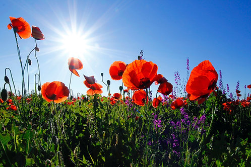 Field of Flowers Chakra Balancing Meditation Using Color Therapy