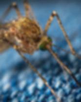 Moskito oder Mücke sticht durch Kleidung mit Stachel Drogerie im Schwamedingerhuus Zürich