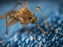 Tips & Tricks: Mosquitoes