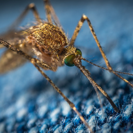 Minimizing Mosquitoes Without Using Chemicals