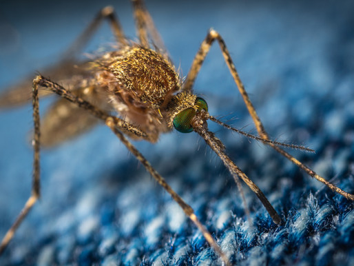 Avoid malaria with some simple precautions