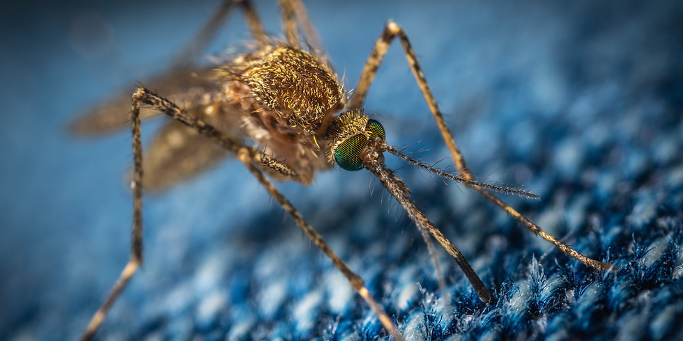 Organic Mosquito Controls