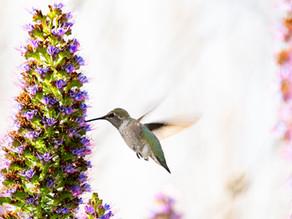 The Legend of the Hummingbird