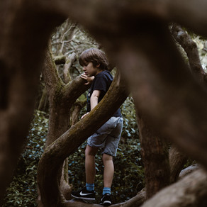 Ruth & Peter's Crew (4-11yrs) Climb a Tree