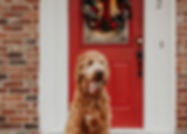 Denton Positive Dog Training