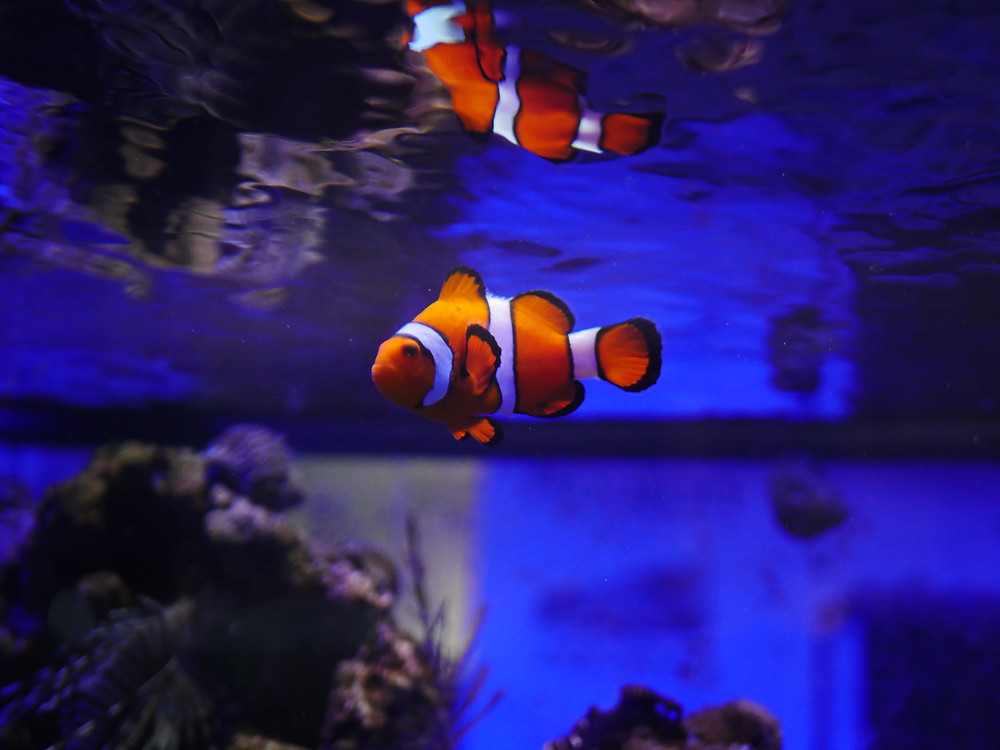 Finding Nemo at Mustard Seed Sentinel