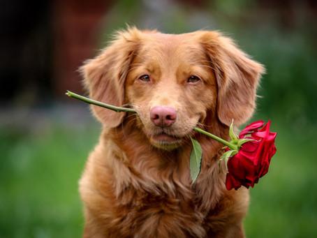 Doglovers Wajib Tahu, Inilah Cara Mengukur Tingkat Kegemukan Hewan Pada Si Doggy