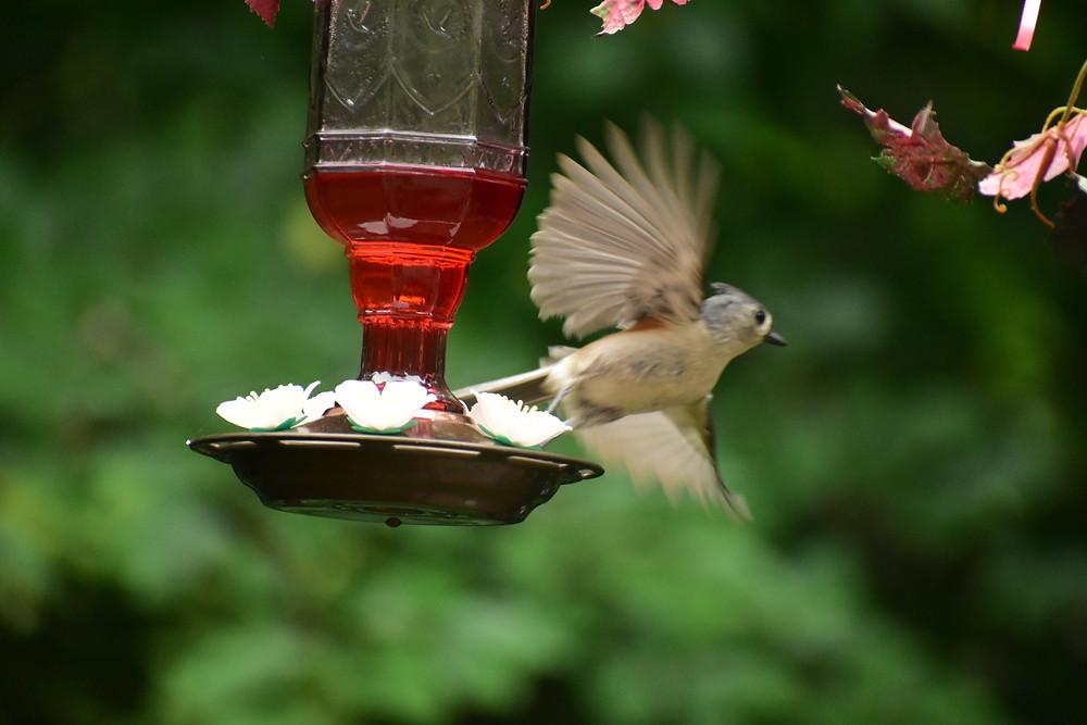 housing cooperative bird feeder